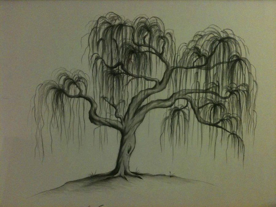 how to draw a weeping willow easy