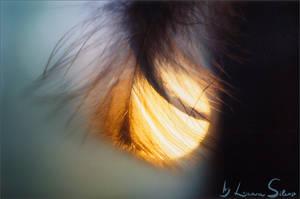 Feathered Sun