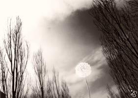 Dandelion by luana