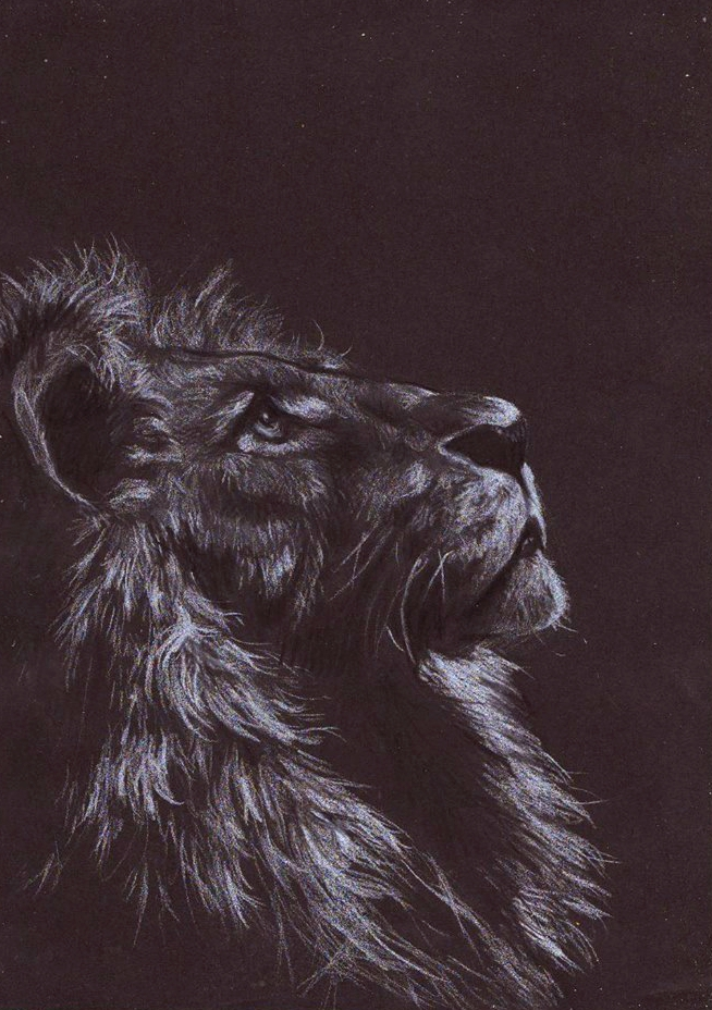 Lion on black paper by missivite