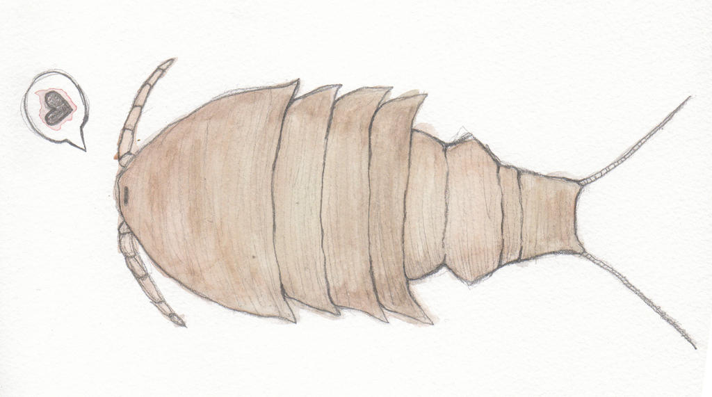 Copepod by Cruxia on DeviantArt