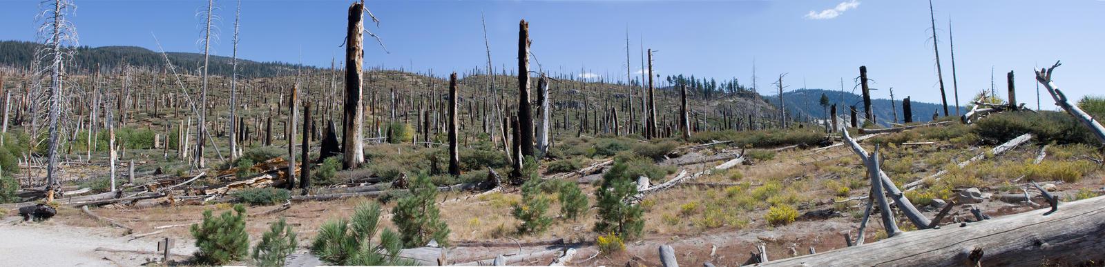 Ansel Adams Reserve Panoramic
