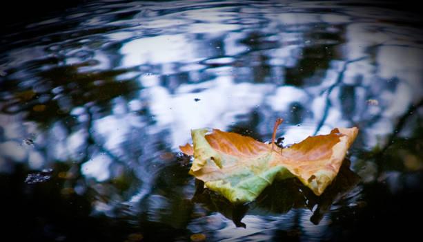 Leaf on Pond