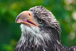 One Confused Eagle