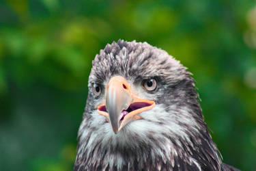 Eagle I by gerryray