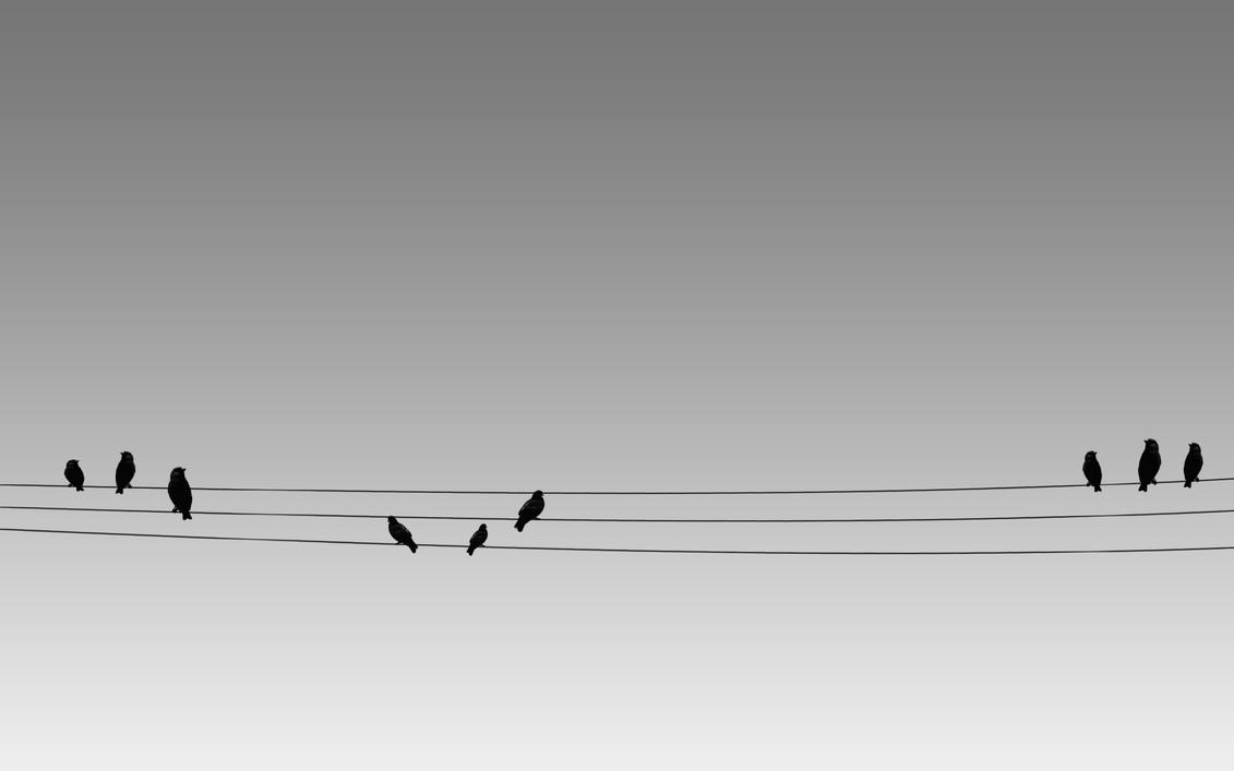 Birds on a Wire by dimage on DeviantArt
