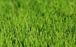 dimage vista grass