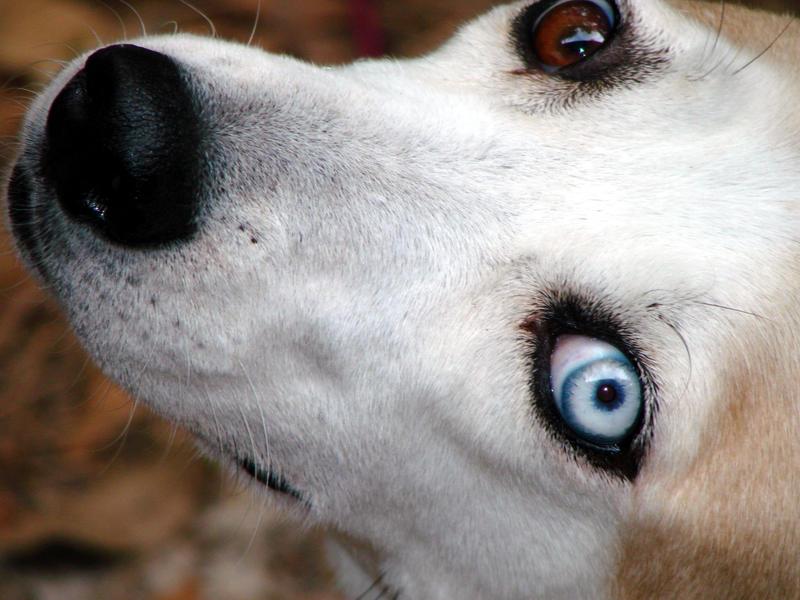Lilth's Eyes by RavensLament