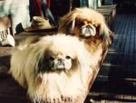 Minkey and Maggie