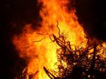 Flaming: Roar by Flynn-the-cat