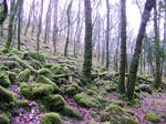 Woodland: Stock