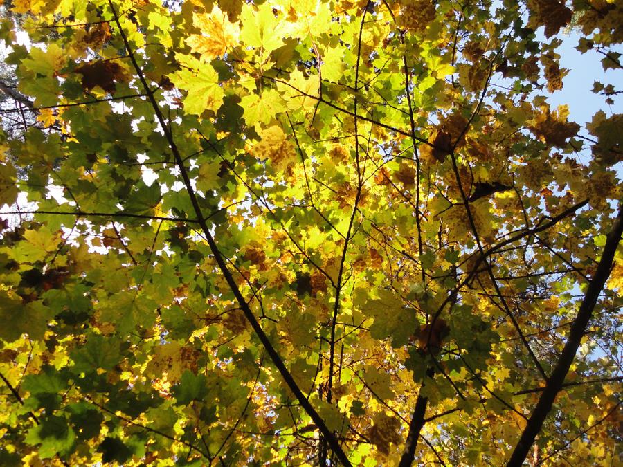 Season of Harvest, of Change by mjolnirrunestone