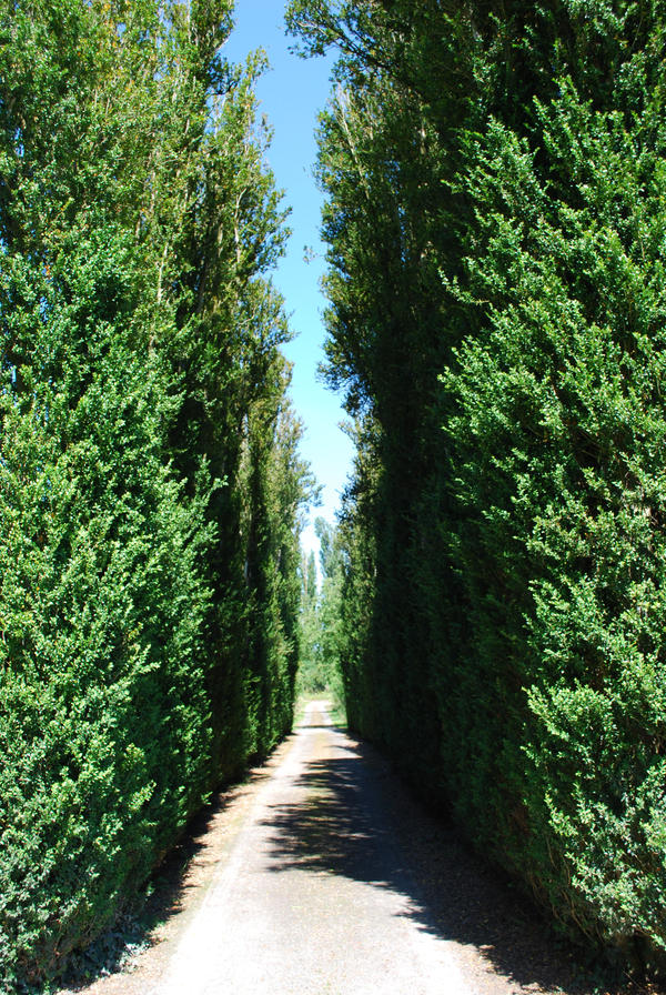 Tree lined path by compasslogicstock on deviantart