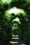 Path through Tree Arches