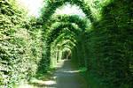 Tree-lined Garden Path Wide
