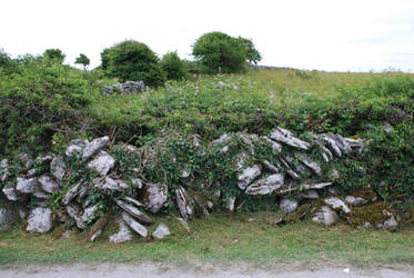 Vine-Covered Stone Wall by CompassLogicStock