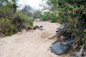 Dry Riverbed 2 by CompassLogicStock