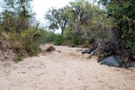 Dry Riverbed 3