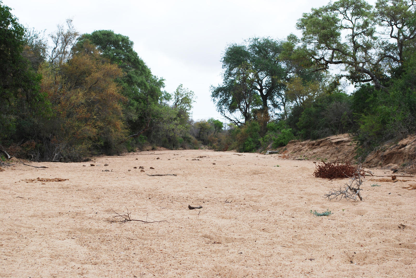 Dry Riverbed 5