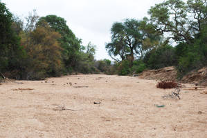 Dry Riverbed 5 by CompassLogicStock