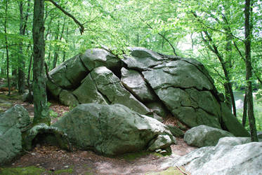 Large Forest Rock by CompassLogicStock