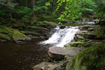 Forest River Waterfall 1
