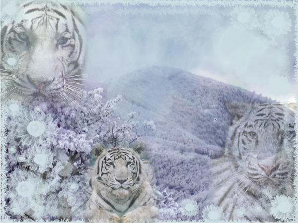 White Tiger Wallpaper Tumblr White Tiger Wallpaper by