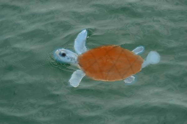 Squirtle Realistic Pokemon Images | Pokemon Images