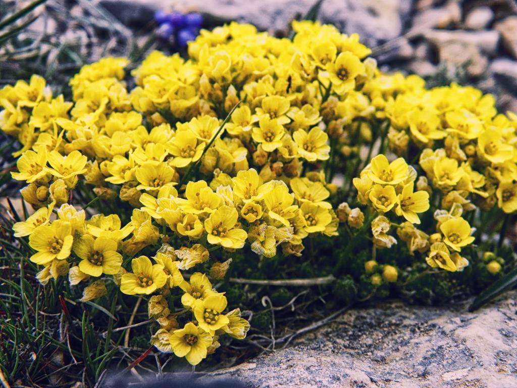 Wildflowers by FarukAytekin
