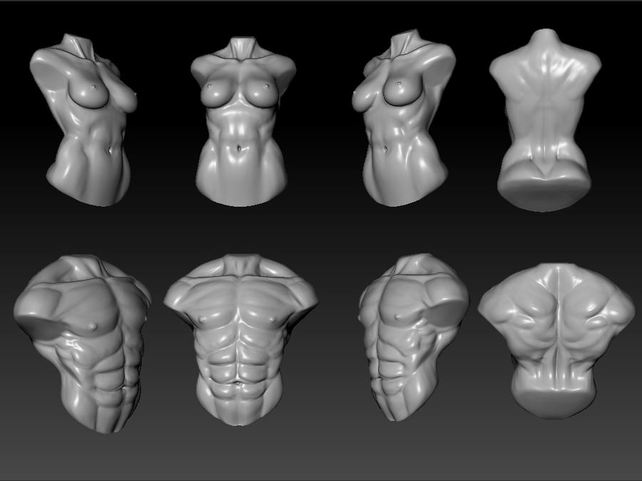 male and female torso study by kiister on DeviantArt