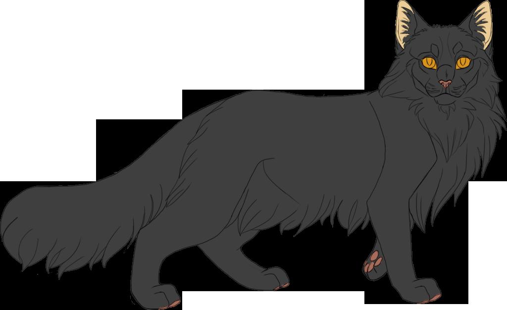 Dark Gray Longhair Cat With Orange Eyes