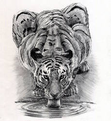 Tiger Drinking Water by ninjason57