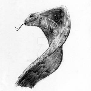 Cobra Sketch
