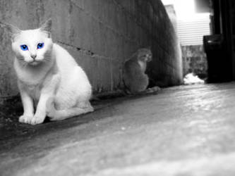 Alley cats by Steffylovee
