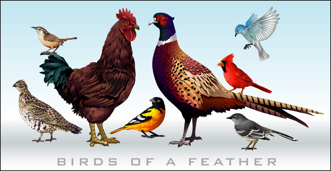 Birds Of A Feather by KillerGraphix79 on deviantART