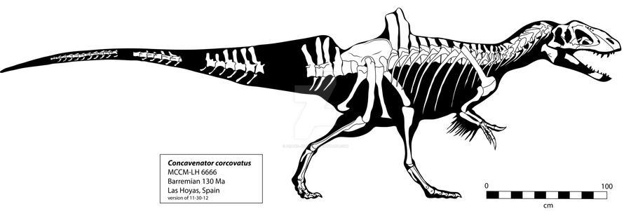 Concavenator Skeleton by Franz-Josef73
