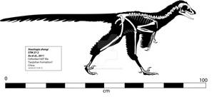 Xiaotingia Skeleton