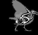 Yanornis Skeleton
