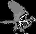Sapeornis Skeleton