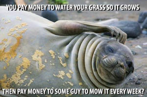 Confused Seal