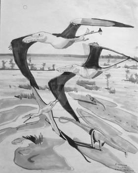 Morrison Pterosaurs-Rough Draft