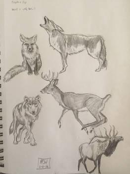 North American Mammals--quick sketch