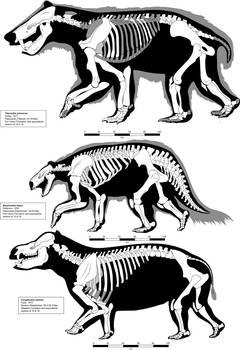 Pantodont skeletal reconstructions updated