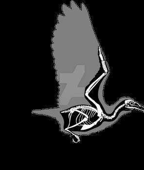 Yanornis martini skeletal in flight mode