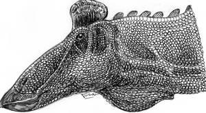 Edmontosaurus regalis head by Xiphactinus