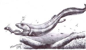 Crassigyrinus scoticus by Xiphactinus
