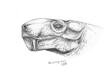 Admetophoneus kargalensis portrait by Xiphactinus