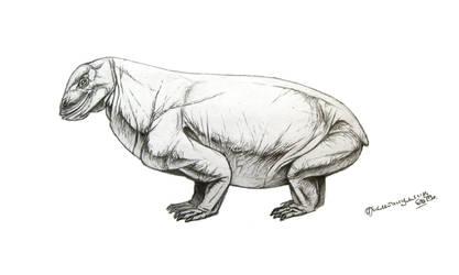 Tapinocaninus pamelae by Xiphactinus