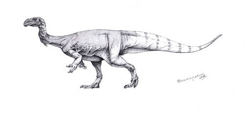 Plateosaurus engelhardti patterned by Xiphactinus