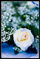 Le blue rose... by Elessar777